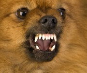 Dog Food Aggression and How to Prevent It